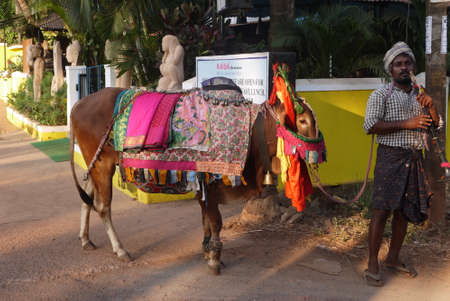 beggar: the beggar the fakir with a pipe and a donkey in a multi-colored body cloth