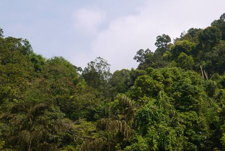 overgrown: mountains the Western Ghats overgrown with green southern plants Stock Photo
