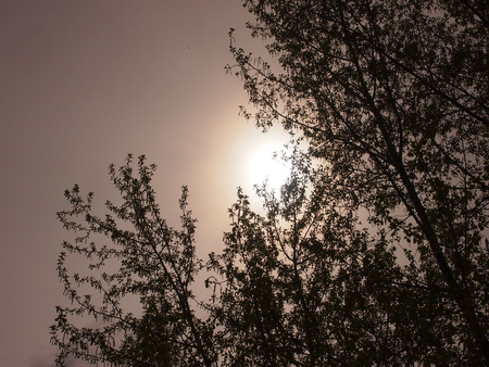 hardly: In the early cloudy morning the sun hardly makes the way through