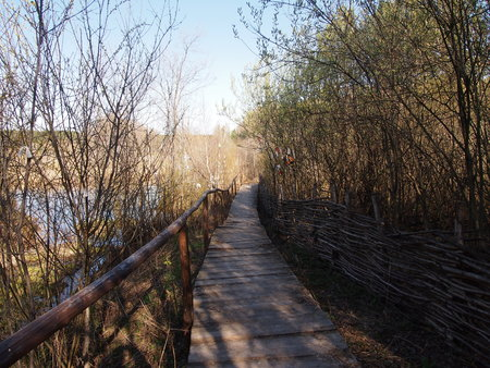 walk board: the wooden pedestrian bridge through a bog in the spring wood Stock Photo