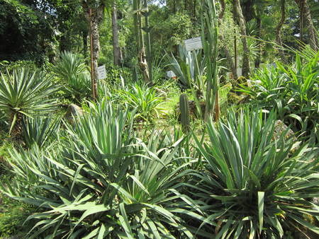 subtropical: The overgrown park with the planted evergreen trees in a subtropical zone