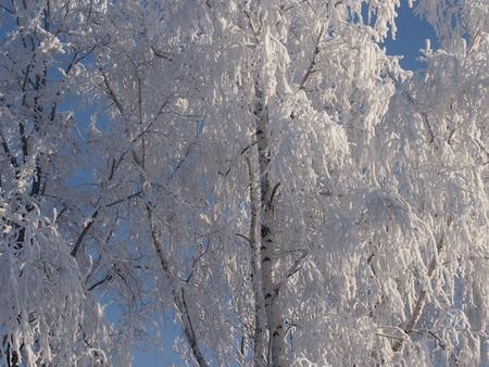 were: Fantastic patterns on trees were created by the nature from snow Stock Photo