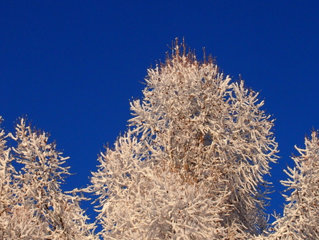 Fantastic patterns on trees were created by the nature from snow Stock Photo