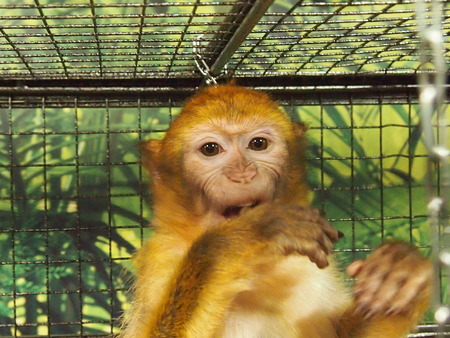 Amusing monkeys in a cage - excellently feel in bondage