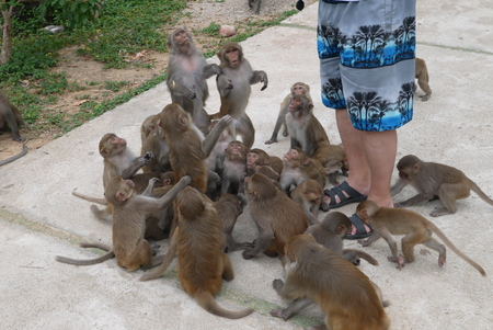 primacy: Vietnam, monkeys in a natural environment of dwelling