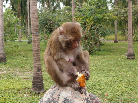 Vietnam, monkeys in a natural environment of dwelling