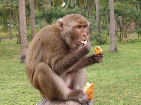 beggar's: Vietnam, monkeys in a natural environment of dwelling