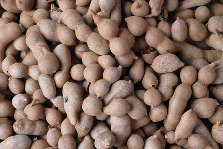 Tamarind - the Indian date - exotic fruit it resembles the same bean, only brown color superficially. Stock Photo