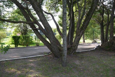공원에서 자라는 Bizzare 모양의 나무