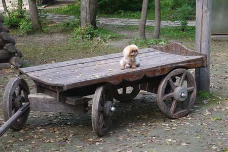 The dog sits on the ancient cart with wooden wheels