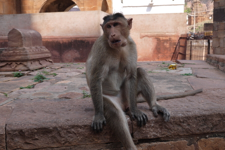 the little macaque sits on the steps of the ancient Hindu temple