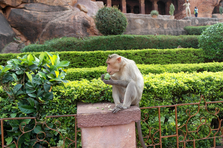Macaque on the steps of the ancient Hindu temple
