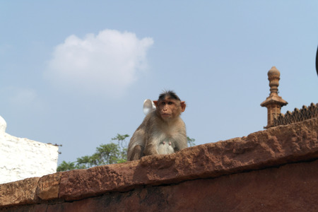 Macaque on the walls of the ancient temple