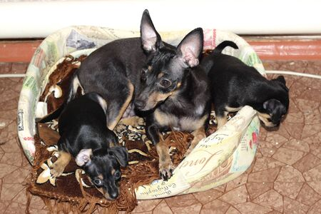 Terriers are a group of dog breeds designed to hunt mine animals and fight rodents