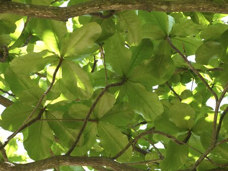 Beautiful emerald background of isorned living leaves Stock fotó