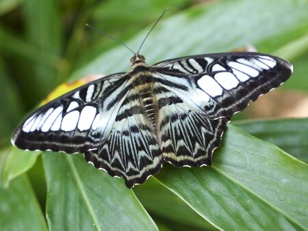 Beautiful butterfly sits on sheet in rainforest