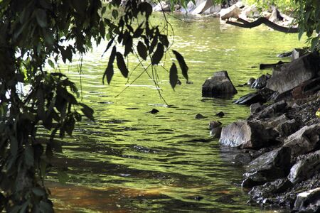 Beautiful water landscape with rocky shore and hanging branches of wood