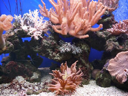 Colorful corals grow in tropical seas waters