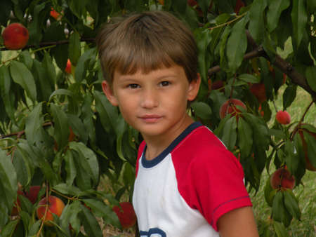 Peach Stare Picking photo