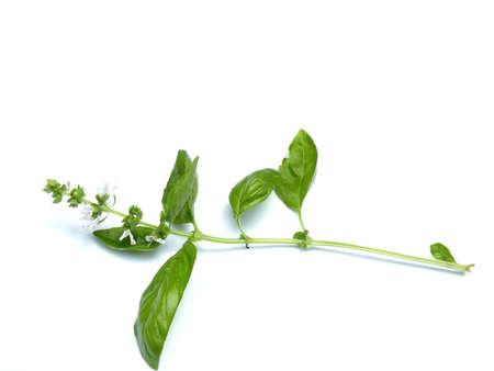 バジルの葉、茎