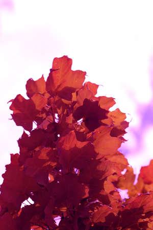 vibrant orange leaves Imagens