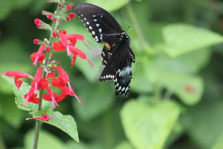 Butterfly in flight Imagens