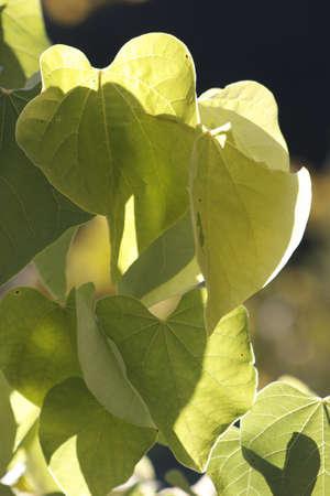 Tree Leaves Stock fotó