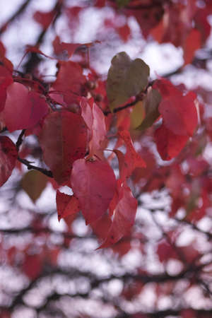 Branch of Fall Leaves Imagens