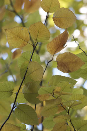 Beginning of Fall