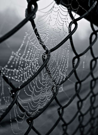 Toile d'araignée Banque d'images - 24731078