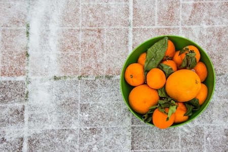 Mandarins and oranges in the green bowl on the snow. It stands on the street. Green leaves wilted from winter frost.