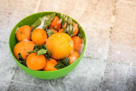 Mandarins and oranges in the green bowl on the snow. It stands on the street. Green leaves wilted from winter frost. Snow falling on citrus