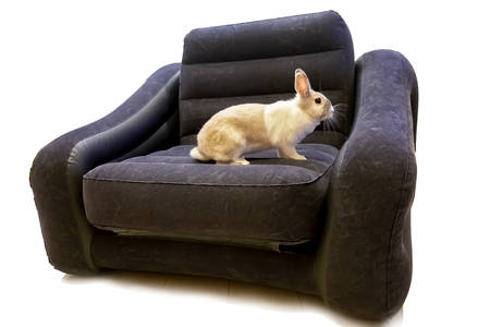 white gray striped rabbit on the armchair. Isolated. On white background