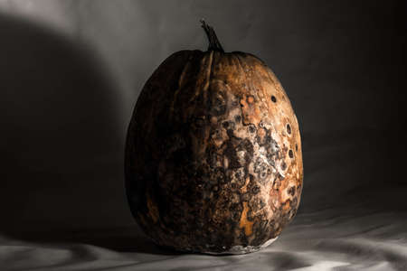 Dry and rotten pumpkin on a black white background, spoiled vegetable. Sinister food Archivio Fotografico
