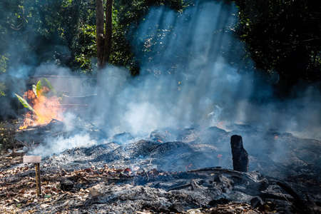 Fire in a tropical forest due to hot climate. a lot of smoke and ash, the suns rays cut through the trees. 写真素材