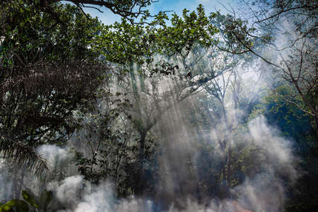 The smoke from the fire in the jungle. The suns rays make their way through the trees. Hot tropical climate caused a fire.