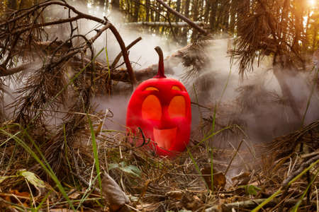 funny smile halloween pumpkin colored in pink  in autumn forest in smoke or fog. Jack o lantern on the needles of fir tree. among the branches of an old spruce Stock Photo - 129840997