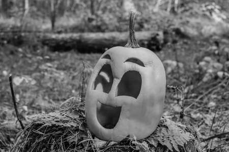 Halloween pumpkin in the autumn forest on an old stump. black and white Stock Photo