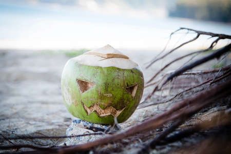 Fresh green coconut is a symbol of Halloween. With a carved face on a pumpkin. Lays in the roots on a wide sandy beach.