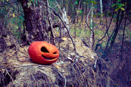Red Halloween pumpkin in the autumn forest on an old stump and a pile of needles from Christmas trees. cold toned