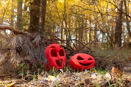 Two funny pink colored halloween pumpkins, a symbol of the feast of all saints. on dried grass among the needles. under the old branch of spruce. Stock Photo