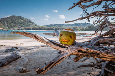A halloween symbol carved from a young green coconut. Scary face like a pumpkin. stands on the branches of a tree against the background of a wide sandy tropical beach. Sunny clear day. Vacation concept.