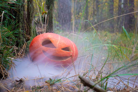 sinister halloween pumpkin in autumn forest in smoke or fog. next to the old rotten tree. Jack o lantern on the grass