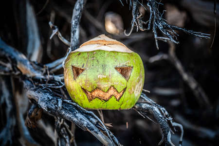 Halloween theme carved coconut. In the roots of a tree. Concept of autumn celebration of All Saints Day in the tropics