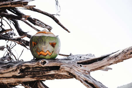 Holiday Vacation Concept. A halloween symbol carved  green coconut standing on the branches of a tree