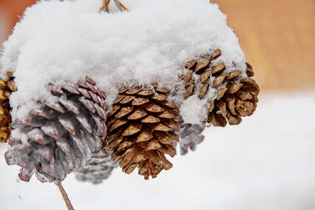 Cones hang on the street in the snow. New Year mood, decorations for the new year Stock Photo