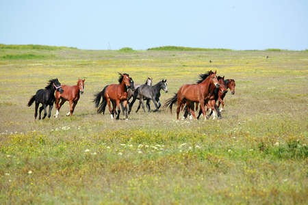 horse, a herd of horses, horse with foal
