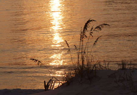 Sea oats against the golden reflection of a sunset on the water.