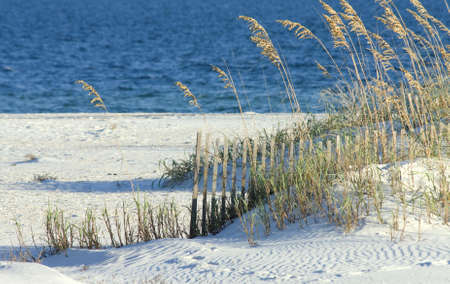 A view of the Alabama gulf coast with sea oats in the foreground.