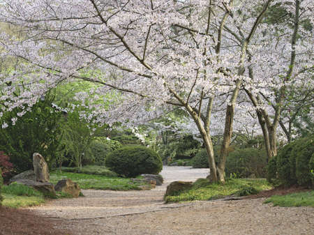 A path through a garden in the spring. 版權商用圖片